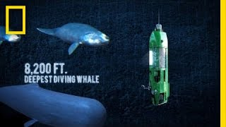 Download Long Way Down: Mariana Trench | National Geographic Video