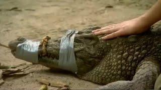 Download Close encounter with a Siamese Crocodile   Saving Planet Earth: Crocodiles   BBC Earth Video
