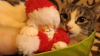 Download Melissa bites Santa Claus on Christmas Video