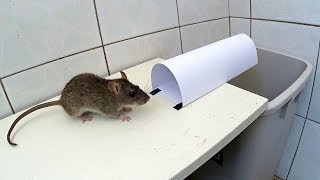 Download paper mouse trap Video
