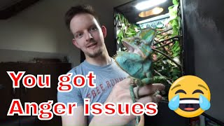 Download Meet Ziggy my new chameleon - SUPER PISSY MALE! Video