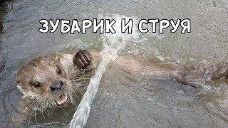 Download ЗУБАРИК И СТРУЯ Video