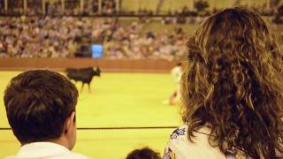 Download I watch Bullfighting // Sport or animal cruelty? GORE // Spain Video