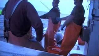 Download Tuna 1000lbs. Giant on A handline Video