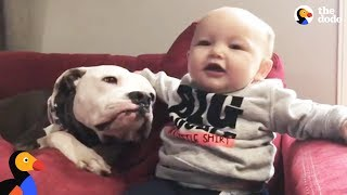 Download 'Aggressive' Pit Bull Dogs Meet New Baby Brother & Help Dad Out of Depression | The Dodo Video