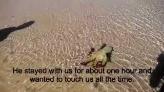 Download Rescued Octopus came back to thank us! Video