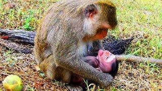 Download Oh no mum ! Mum fight baby much and much, Baby angry mum very much , baby just hug mum #905 Video