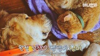 Download '친자매'같은 개x고양이♥ 이 투샷 안본 사람이랑 겸상안함!! Video