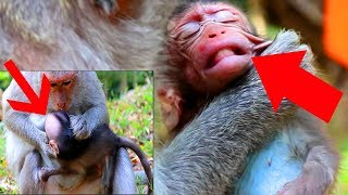 Download Why Mom Bite New Baby Monkey Like This?Luna Was Bitten By Mom|Luna New Baby Crying So Loudly,SOK ST Video