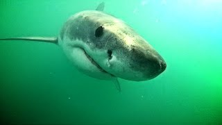 Download Shark deterrent results Video