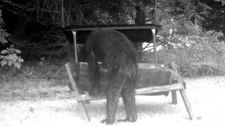 Download Bigfoot Caught On Pennsylvania Trail Cam? Video