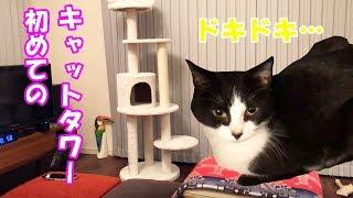 Download 【猫】初めてのキャットタワー!ビビリなおむすびさんの反応は? Video