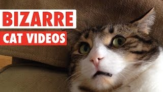 Download Most Bizarre Cats Compilation 2016 Video