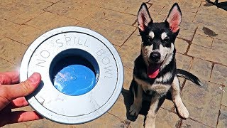 Download 5 No Spill Water Bowl for Dogs Test! Video