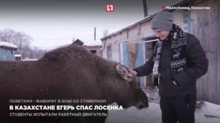 Download В Казахстане егерь спас лосенка Video