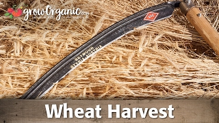 Download Tips to Help You Prepare For Your Wheat Harvest Video