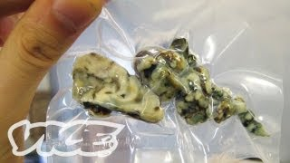 Download The Rise of Psychedelic Truffles in Amsterdam Video