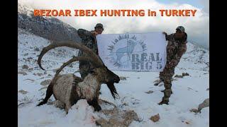 Download Bezoar Ibex Hunting in Turkey Video