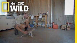 Download Kangaroo Potty Training | Kangaroo Dundee Video