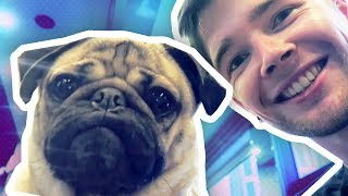Download MEETING THE WORLD'S MOST FAMOUS PUG!!! Video