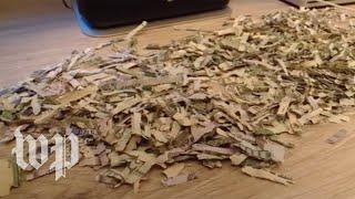 Download 'I've never heard of a kid shredding a grand': Toddler shreds parents savings Video