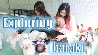 Download Exploring Ibaraki with Kim Dao and Internationallyme Video