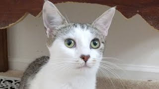 Download Kitten Close Up 2017-07-08 Video