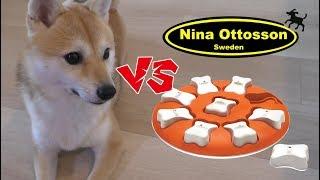 Download 柴犬シバチャ vs スウェーデンの知育玩具 天才犬現る!? Level1 Video