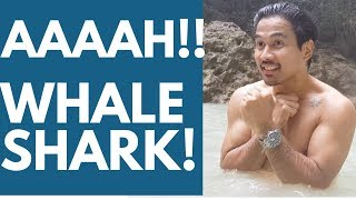 Download Whale Shark in CEBU, Philippines VLOG 43 Video