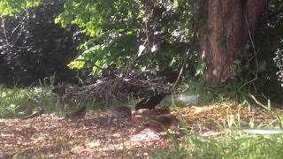 Download 2018 Critter Feeder Cam and Bird Feeder Cam Replay #166: Thursday 05-10-2018 Video