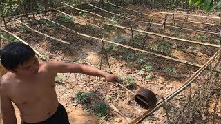 Download Primitive Technology:Watering system!Primitive life-wilderness Video