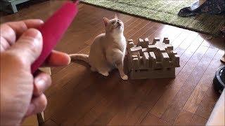 Download だいずを釣るお母ちゃん【猫日記こむぎ&だいず】2019 05 19 Video