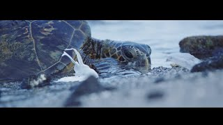Download Plastic Pollution, Our Oceans, Our Future... Video