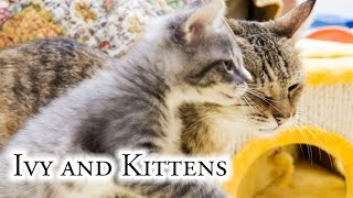 Download Ivy And Kittens Video