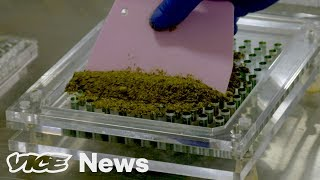 Download Is Microdosing The Future of Marijuana? Video
