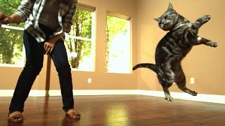 Download Awesome Cats In Slow Motion (1,500fps) Video