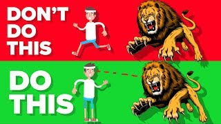 Download Do This If You Are Attacked By a Lion Video