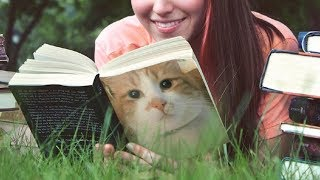 """Download 猫のご意見番 ネタ切れ説のヒカキンが""""猫の手を借りて""""再生回数が8倍に急増! Video"""