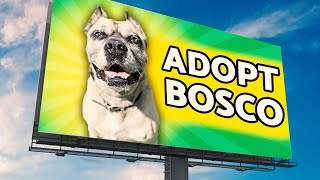 Download No One Wants This Homeless Dog So I Put Him On Billboards! Video