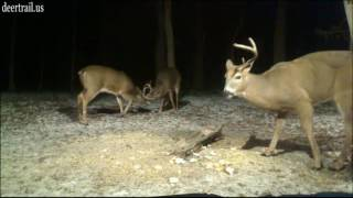 Download First Buck To Drop An Antler (121-10-16) Video