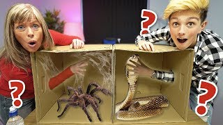 Download What's in the BOX Challenge!!!!!!! (ANIMALS) Video