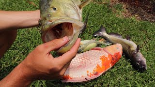 Download What HAPPENED to my PET Fish. . .R.i.p Video