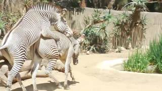 Download Los Angeles Zoo 2016 Video