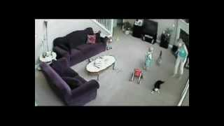 Download Cat defends baby from babysitter Video