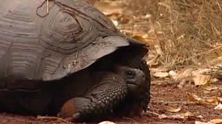 Download Tourist killers - BBC Environment Video