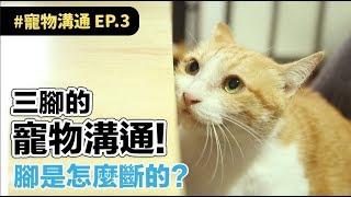 Download 【三腳的寵物溝通!腳是怎麼斷的?】志銘與狸貓 Video