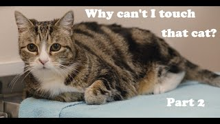 Download Why I can't touch this cat part 2 Video