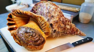 Download Japanese Street Food - GIANT TRUMPET CONCH Sashimi Okinawa Seafood Japan Video