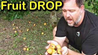 Download Why is My Tree Dropping Fruit & How to Stop Fruit Drop Video