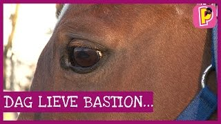 Download Dag lieve Bastion... Video